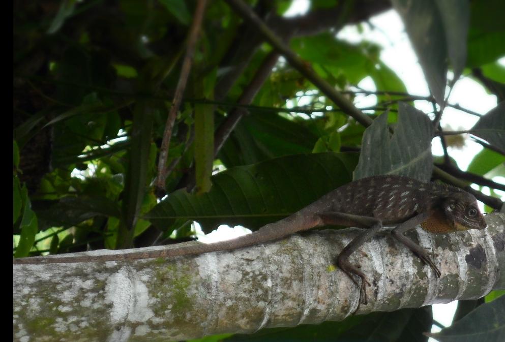 perngertian dan contoh hewan ovovivipar