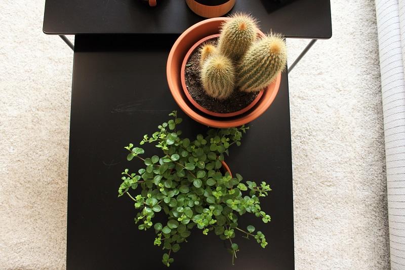 kaktus ja viherkasvi