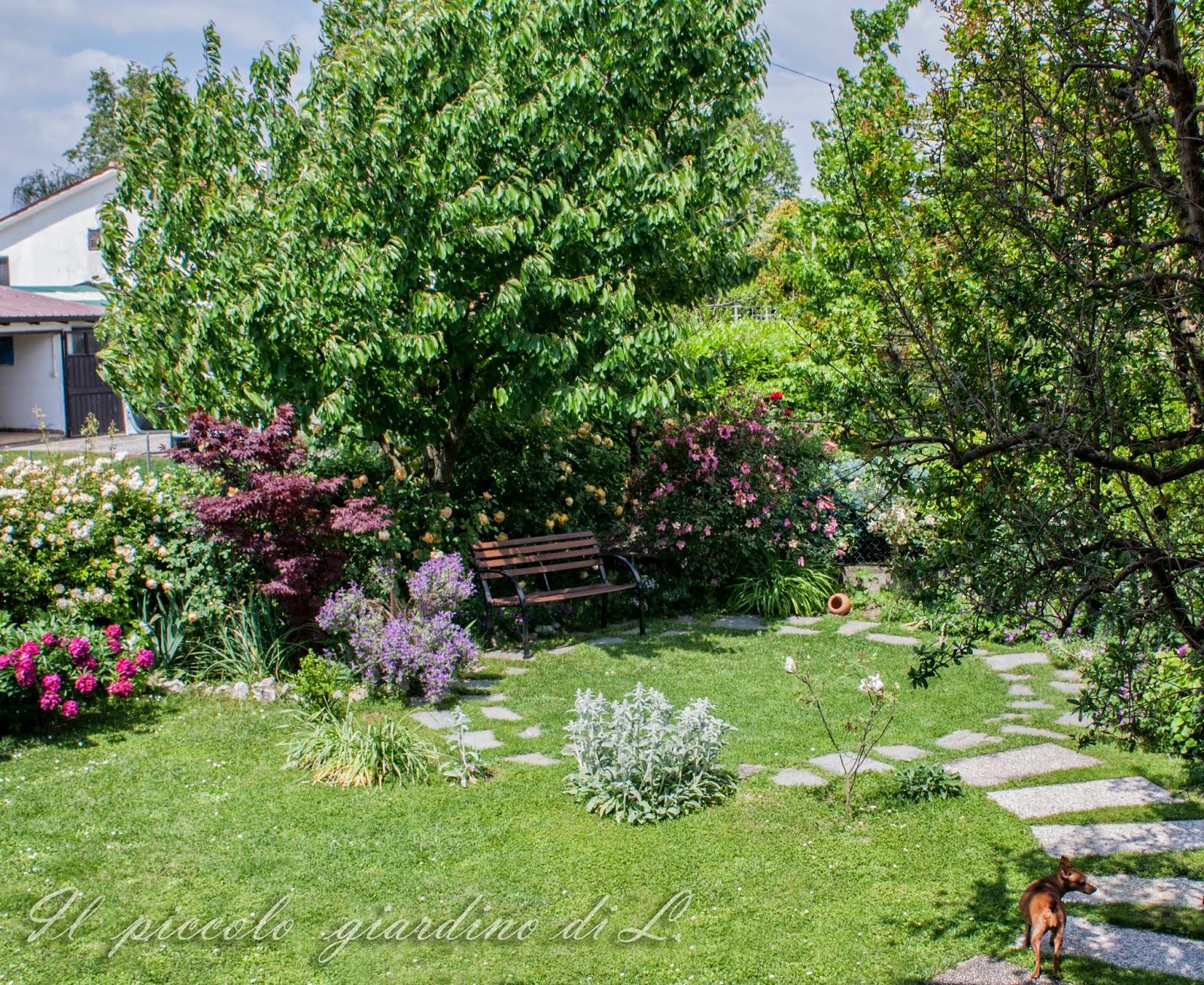 Il piccolo giardino di l una visione d 39 insieme del mio - Piccolo giardino ...