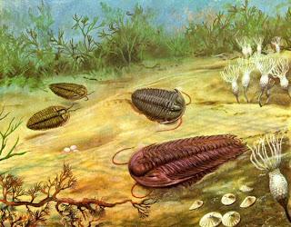 Trilobita