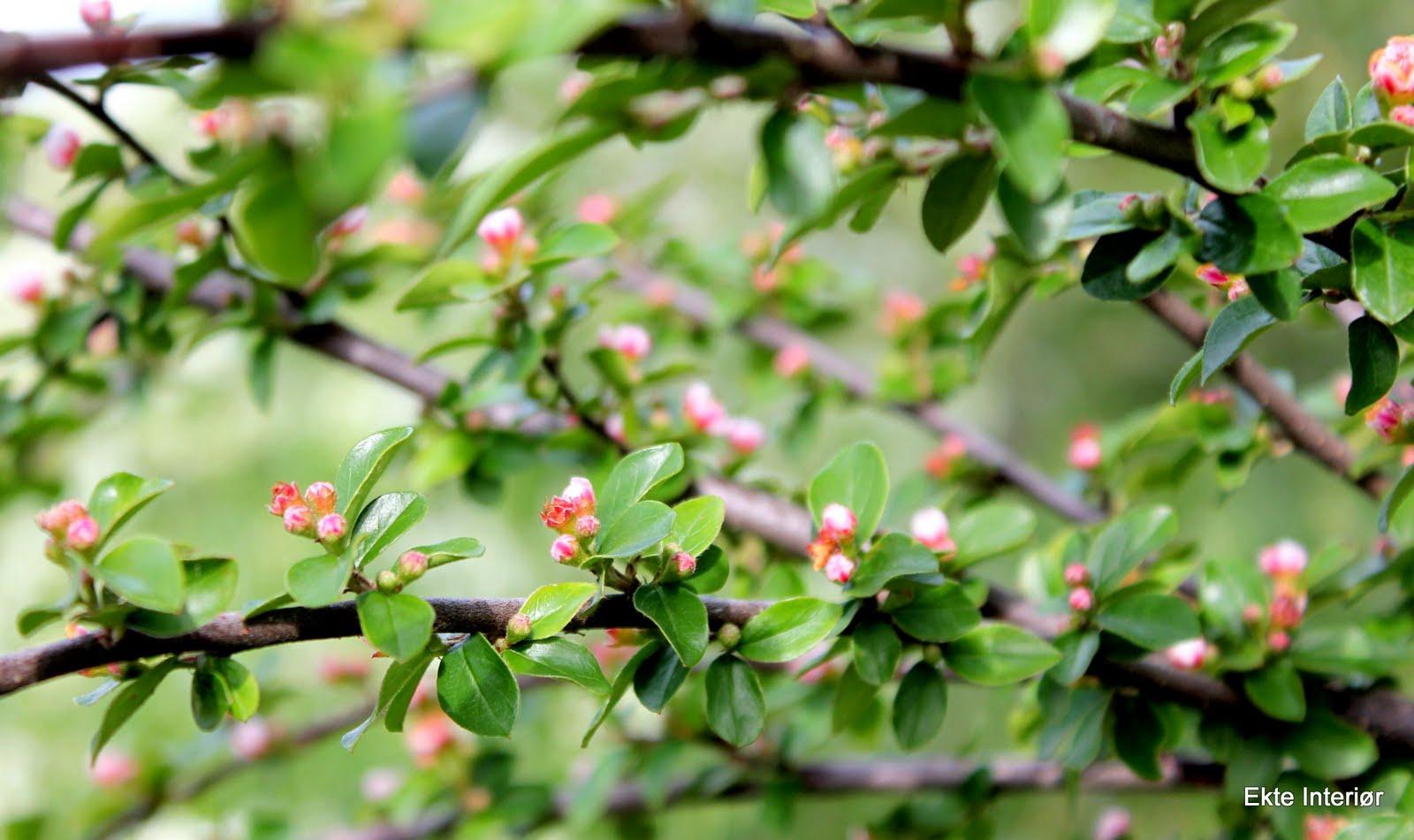 navn hage blomster