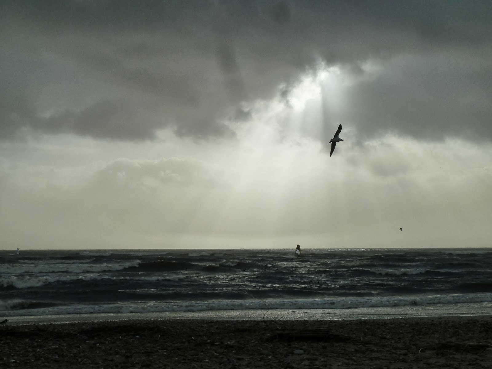 Seagull and windsurfer silhouetted against winter sky