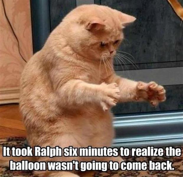 funny animal memes part 3