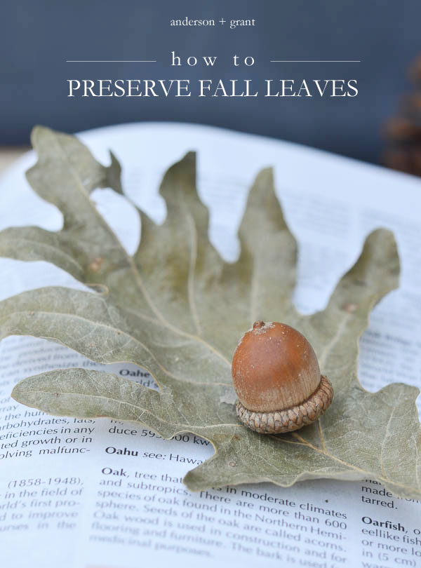 Learn how to preserve fall leaves that can be used in decorating your home.  |  www.andersonandgrant.com
