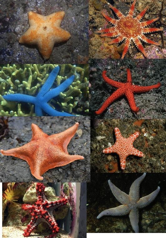 Long Island Marine Invertebrates