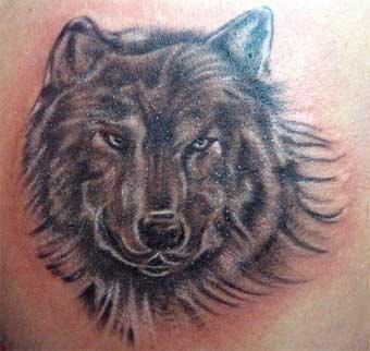 Wolf Tattoos on Wolf Tattoo Picture Gallery   Wolf Tattoo Ideas