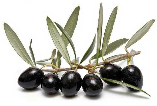 Manfaat ekstrak daun zaitun untuk kesehatan