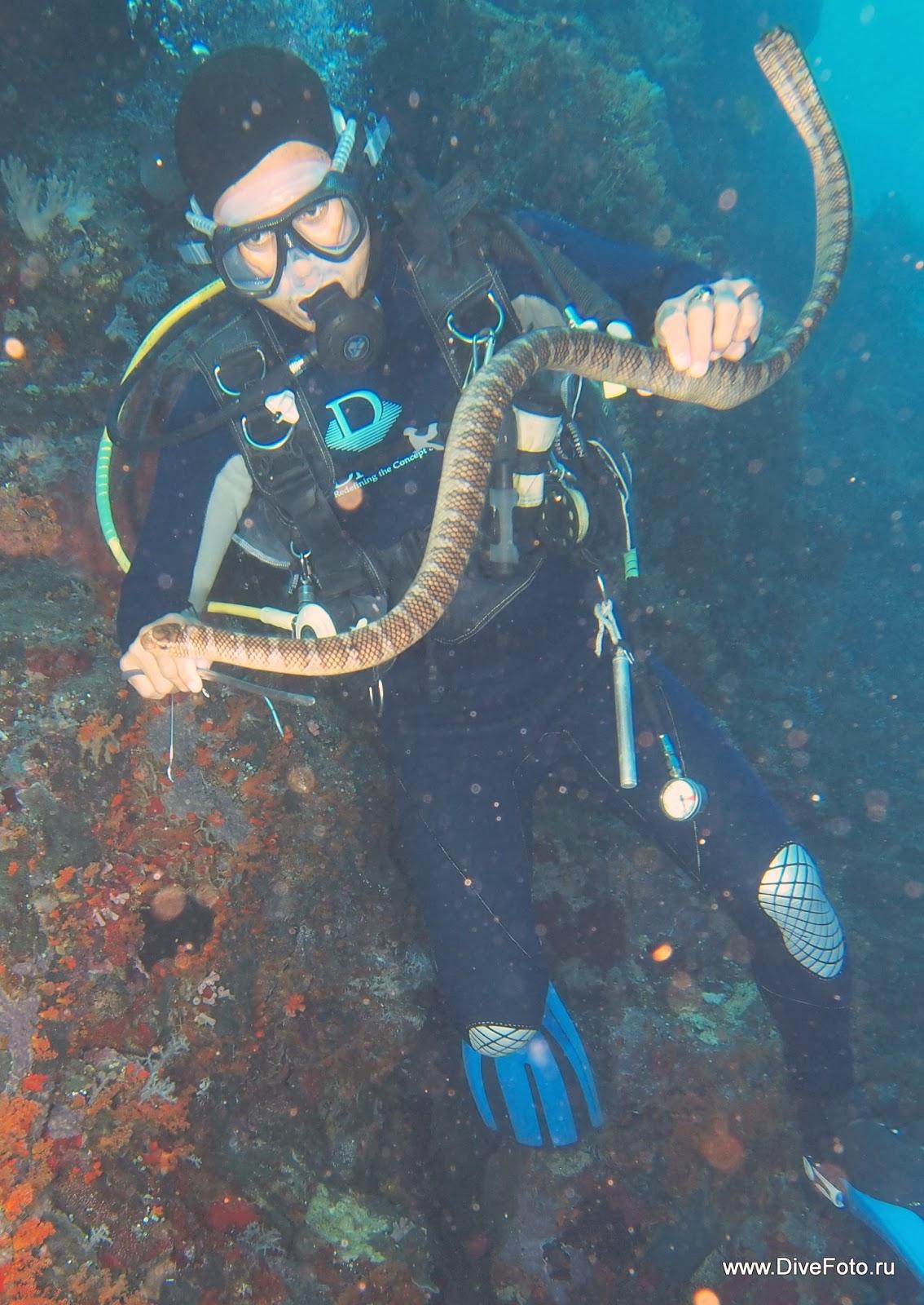 Гид с морской змей  фото
