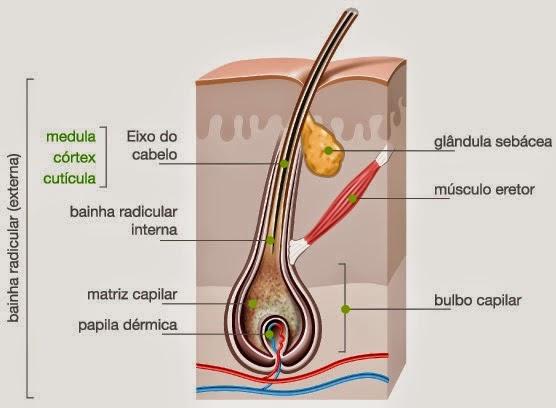 Caldo de latido de carvalho no momento de umas respostas de perda do cabelo