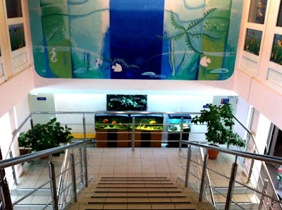 Аквапарк «Аквариум» в Абзаково: цены, описание, график работы, фото, видео
