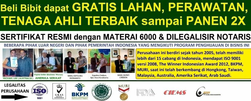 Investasi Jabon I-GIST PT.GMN   Investasi Pohon Jabon   Bisnis Investasi Terbaik Terpercaya di Dunia