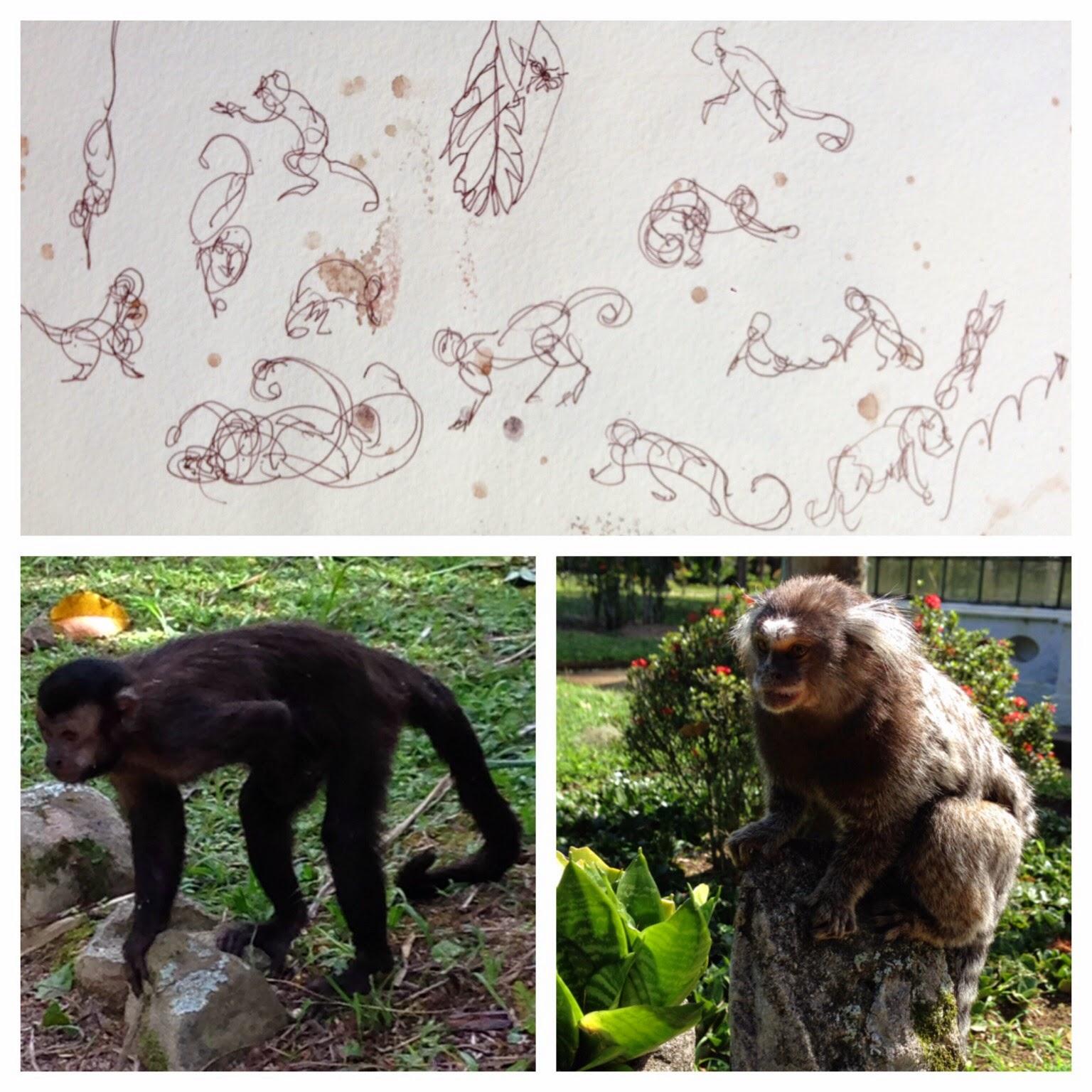 "Shiho Nakaza ""Rio de Janeiro"" Rio pen sketch sketching ""travel sketching"" ""Jardim de Botanico"" ""Botanical Garden"" nature animal monkey ""gesture drawing"""