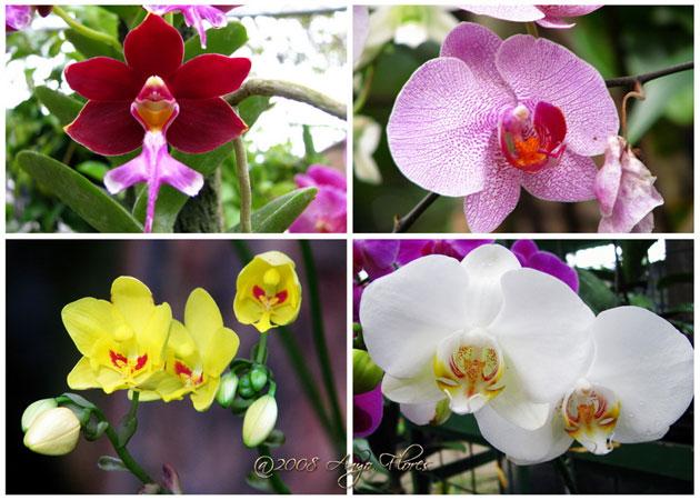 Gambar-Gambar+Bunga+Anggrek.jpg