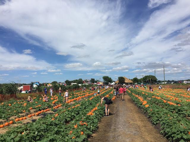 Bedner's Farm 1