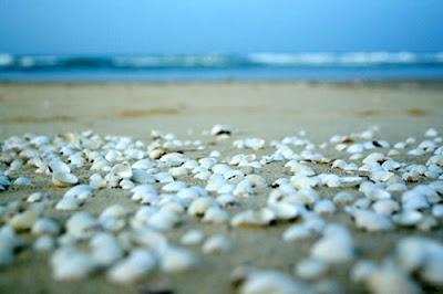 Cua Tung Beach