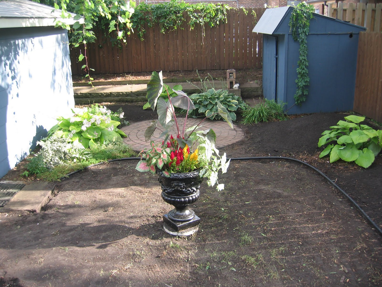 the wild reed backyard makeover