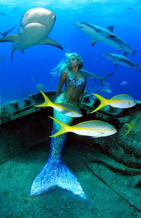 Http Dream The Impossible Blogspot Com 2012 08 The Mermaid Begins Html