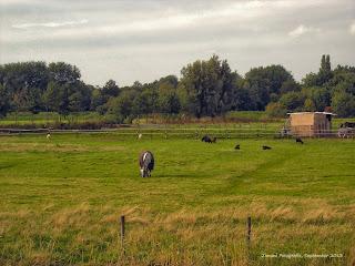 Paarden+en+schapen+in+het+park.jpg