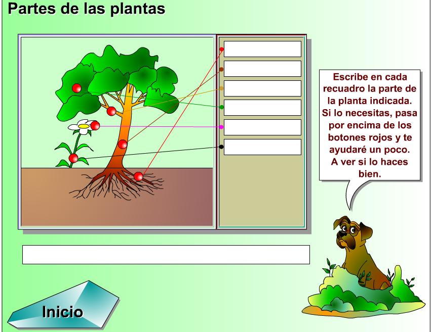 http://www.genmagic.net/natural/plant1c.swf