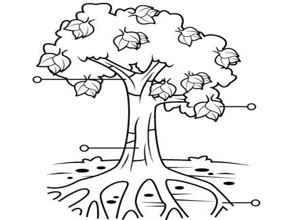 Conociendo y cuidando las plantas for Imagenes de las partes del arbol