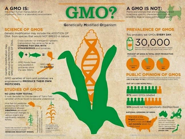 Perbezaan GMO Dan NON-GMO