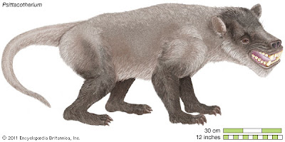 Taeniodontia Psittacotherium