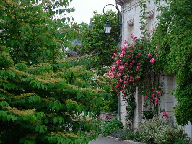 Promesse de roses en touraine festival des roses for Jardin 0 l4anglaise