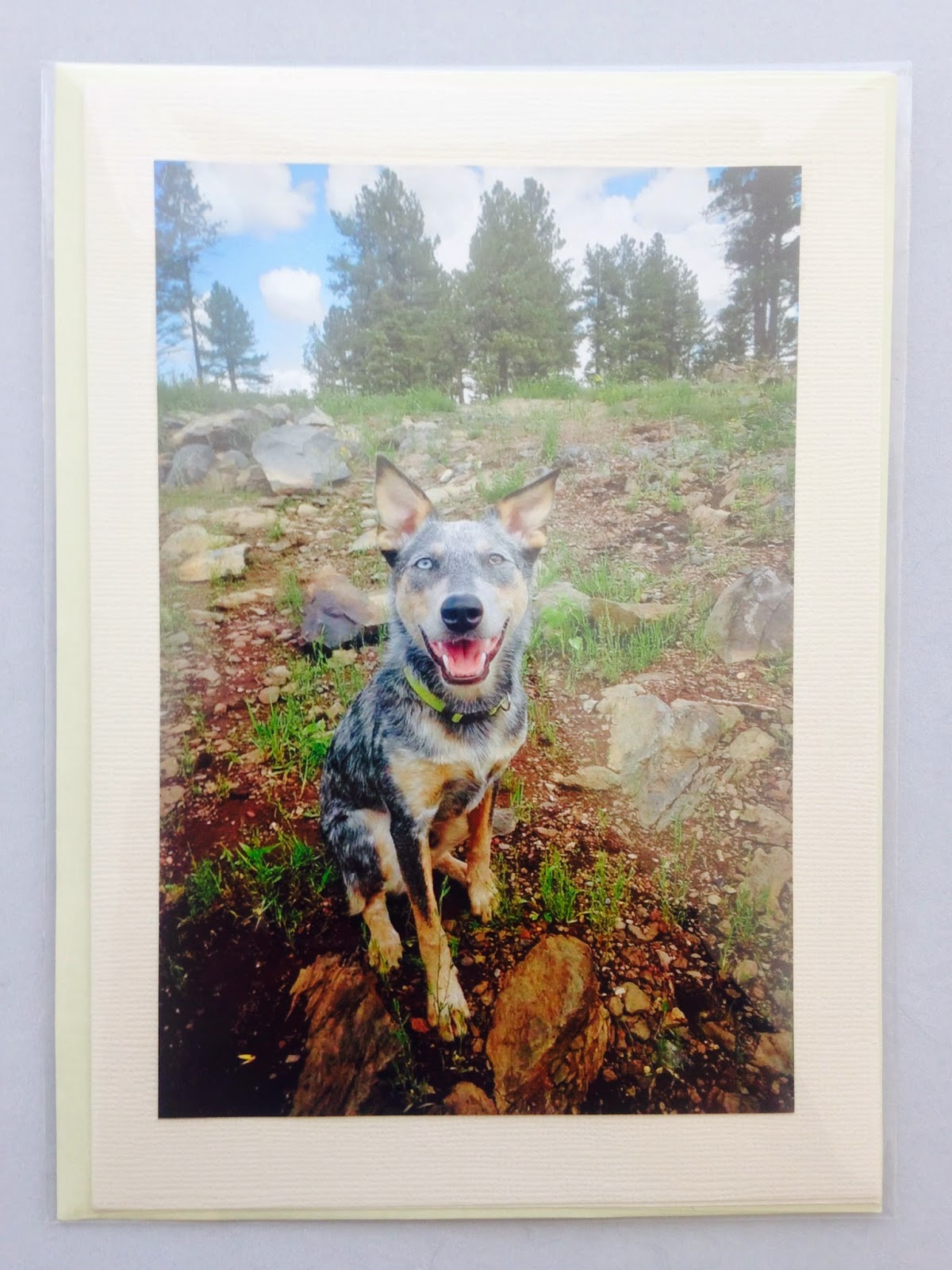 Wind Wolf Photography Custom Greeting Cards
