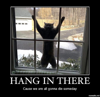 hang in there demotivation cat
