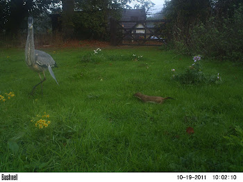 Camera Trap Mammal Photos