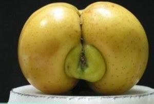 """Cette photo montre un drôle de fruit, vraisemblablement une pomme, ou un croisement entre la pomme et le coing. Ce fruit, posé hiératique sur une espèce d'assiette, ou en tout cas un socle circulaire, est de couleur jaune avec quelques tache brunes à sa surface, ce qui l'assimile à une pomme de la variété golden. Or ce semblant de pomme golden est particulier en ceci qu'il présente en son centre une excroissance verte qui fait en quelque sorte la liaison entre les deux moitiés du fruit, celles-ce étant séparées par une rainure sombre.  Les caractéristiques si particulières de ce fruit, et c'est en cela qu'il est intéressant, font immédiatement penser au spectateur, même si celui-ci n'a pas l'esprit mal placé, à de belles fesses rebondies avec la raie et le vagin, en somme un bon cul tendu avec la chatte offerte pour une levrette au minimum.  Cette image de ce fruit pour le moins cocasse illustre avec un superbe à propos le poème du Marginal Magnifique intitulé """"Le fruit de la renommée"""". En effet, dans ce poème brillant et rôle, Le Marginal Magnifique, toujours aussi spirituel, évoque le fait que les hommes célèbres, qui on du pouvoir, jouissent d'une grande quantité d'admiratrices, bref qu'ils niquent un peu toutes les femmes qu'ils veulent. Le grand poète prend pour exemple un de ses pairs, Victor Hugo, qui multipliaient les maîtresses, malgré son physique ingrat. A l'opposé, il évoque Brad Pitt, acteur au physique de rêve, et l'imagine sur un échafaudage dans une tenue dégueulasse, expliquant que malgré tous ses atouts physiques il aurait alors beaucoup moins d'impact sur la gente féminine.  Ce poème se veut un constat simple et amusé d'un fait social : l'argent, le pouvoir, la renommée signes de qualités viriles dans notre société ont remplacé la force brute des sociétés primitives."""