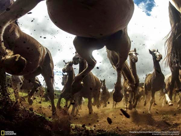 8.) A stampede of majest horses - 12 Photos That Prove Nature is Awesome