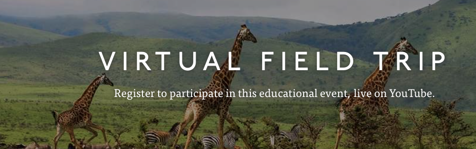 "This is a picture of three giraffes running over the plain of Africa. This picture reads ""Virtual Field Trip"" and also gives information on where to register for this event."