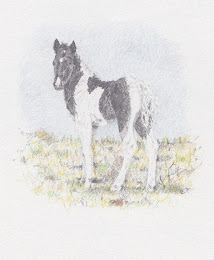 Second Foal, May 2012