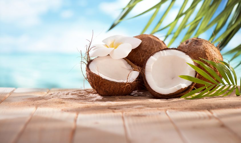 Human performance noce di cocco for Pianta di cocco