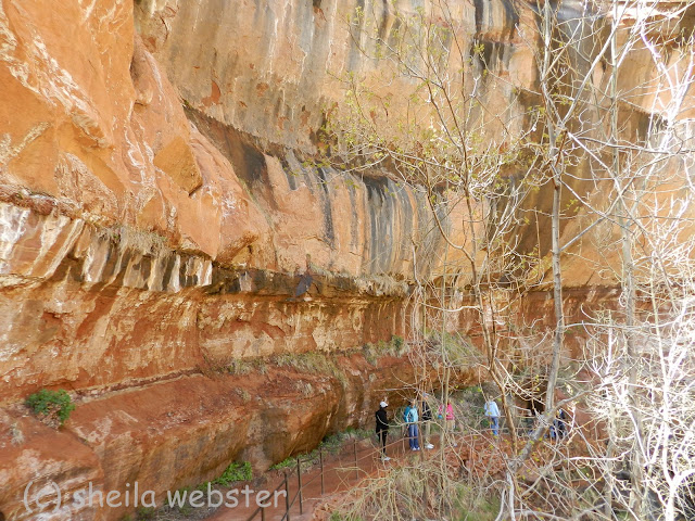 The trail follows the curve of the canyon wall where the water falls.