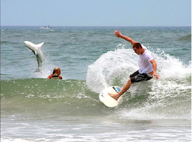 A Little About New Smyrna Beach Florida Fun Fact About New Smyrna It S The Shark Bite