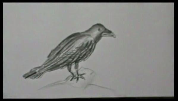 un corvo