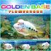 Ikan Louhan flowerhorn fish