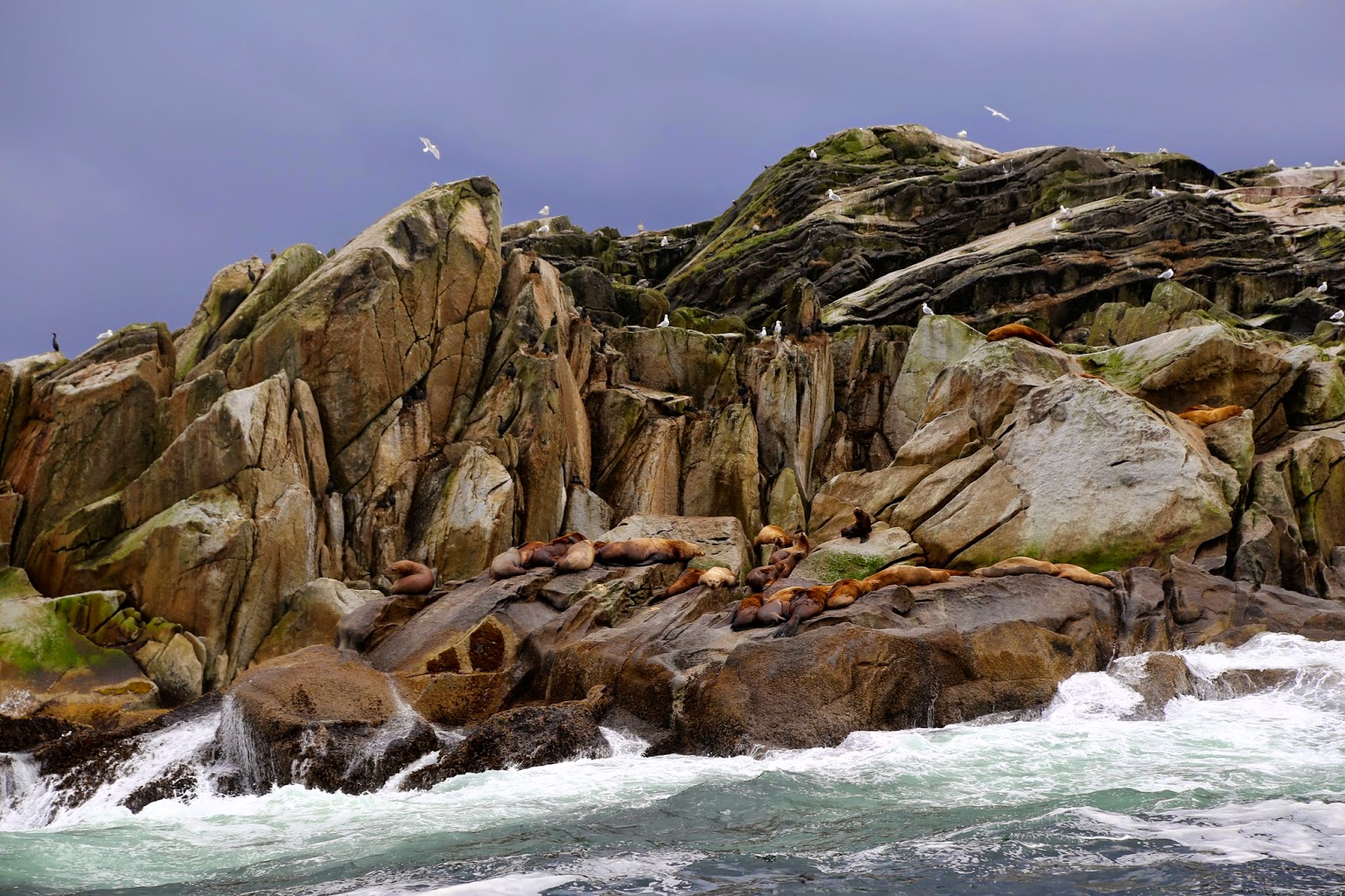 Sea lions on a rock, sitka, alaska