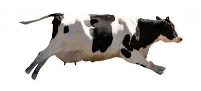 ¿Qué pasa si no existiesen las vacas?