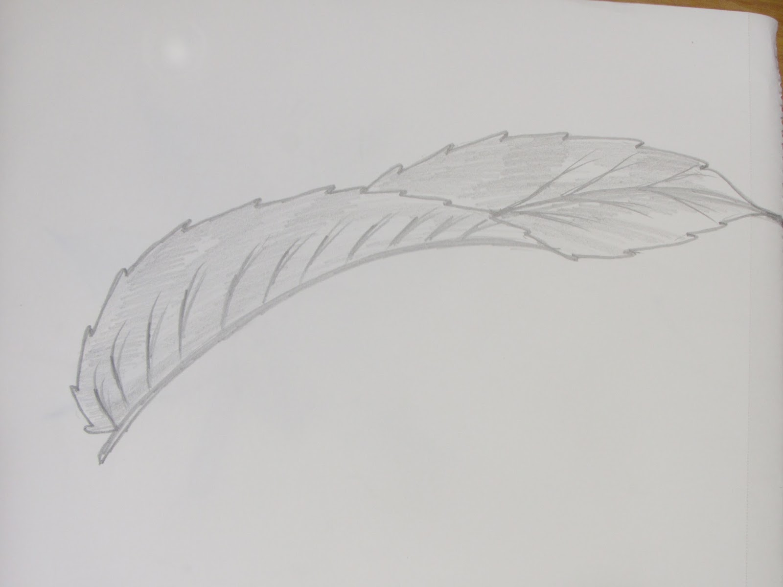 Richa art club draw and sketch long curved indica type leaf painting sketching drawing