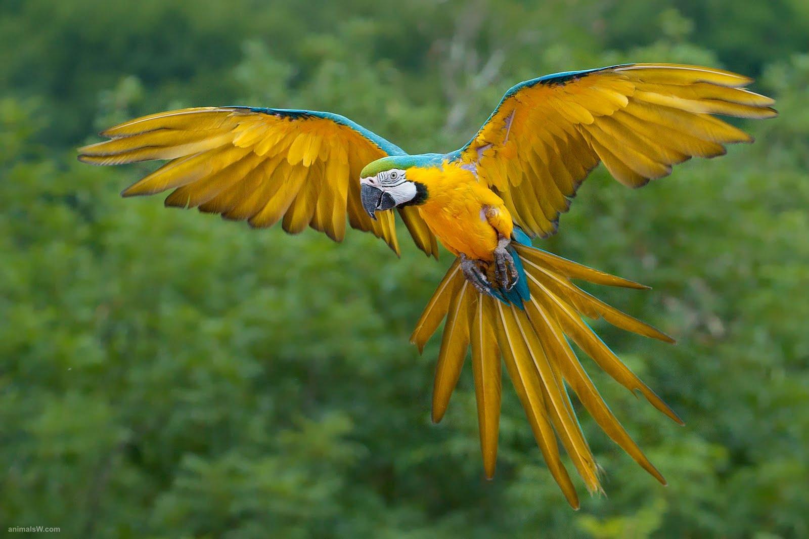 Tropical Rainforest Birds Flying