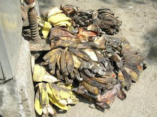 Cara mengolah kulit pisang menjadi pakan alternatif ternak ayam