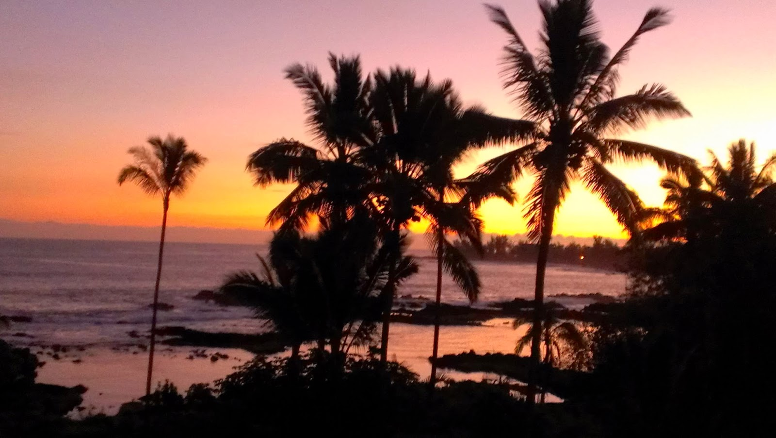 copyright 2014 All Hawaii News all rights reserved