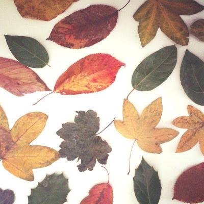 ByHaafner, autumn leaves