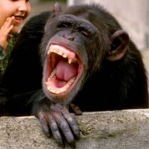Happy Cartoon Gorilla Face Animals Laughing Funni...