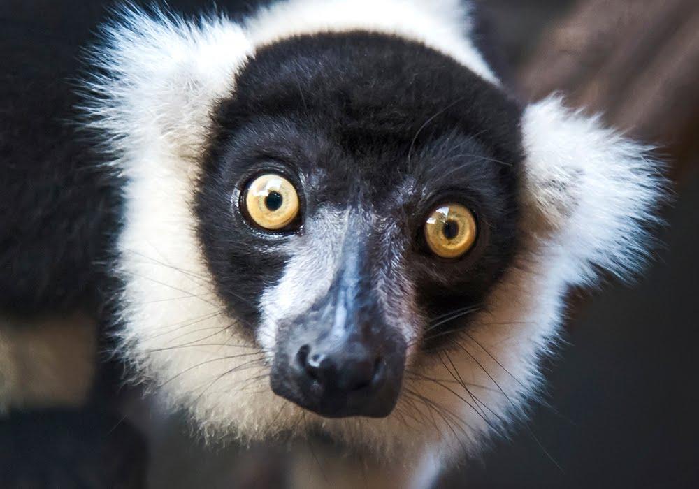 Madagascar Photo Tour 2016