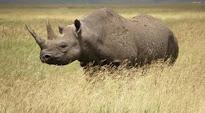 Dos rinocerontes negros nacen en el zoo Dvůr Kralové, en República Checa