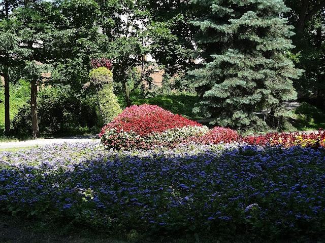 Roślinna figura pawia w parku miejskim